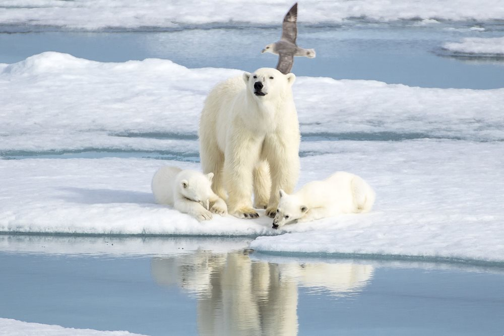 SAVE on 2019/20 Polar Voyages